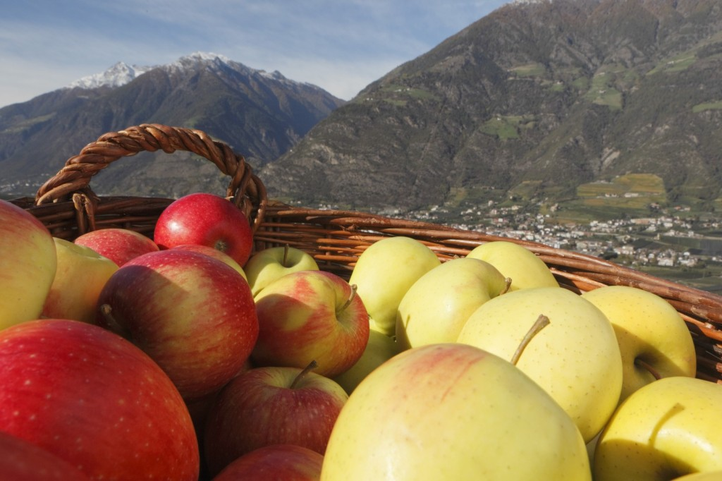 Vom Apfel und der Apfelernte in Südtirol