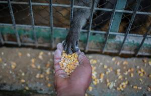 Gaza: VIER PFOTEN rettet 136 Zootiere vor dem Tod