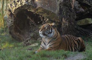 Verlängerte Öffnungszeiten: auch abends den Zoo Osnabrück erleben