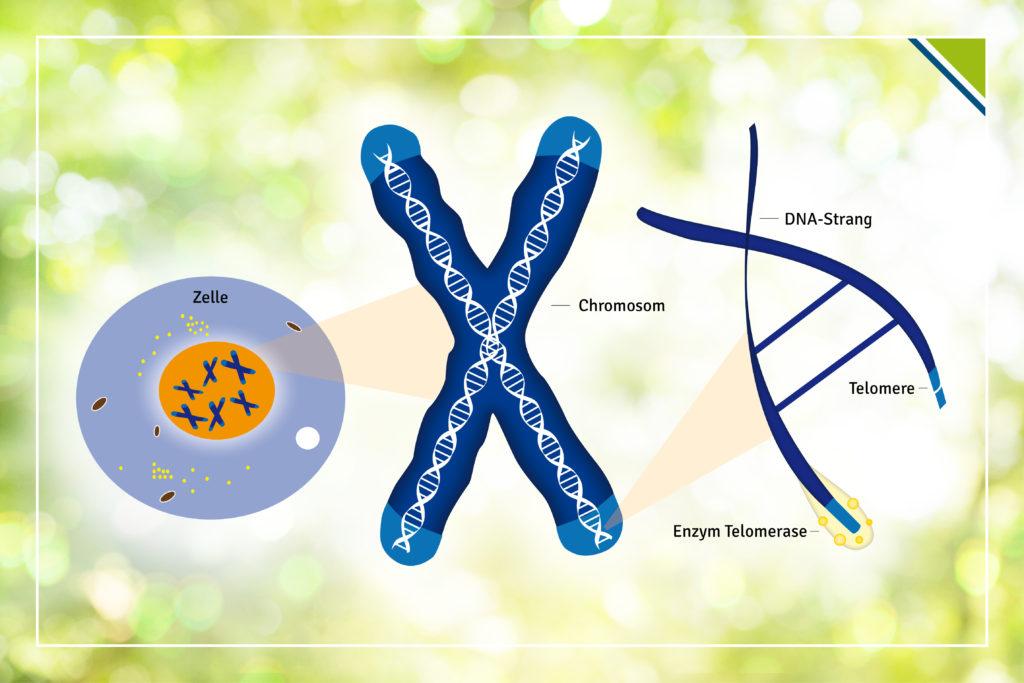 Pressebild2_Bewegung-nach-Krebs-Körperzelle-1024x683 Bewegung nach Krebs kann Rückfallrisiko um bis zu 67% senken