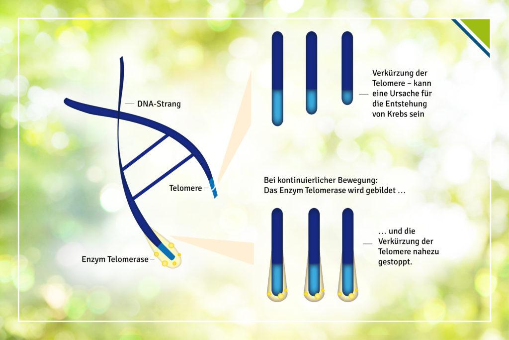 Pressebild3_Bewegung-nach-Krebs-Telomerase-1024x683 Bewegung nach Krebs kann Rückfallrisiko um bis zu 67% senken