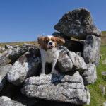 Hundefreundliche England-Reise