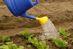 Gartenerde Kompost Humus Mutterboden