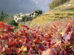 Extremer Wein auf hohen Bergen