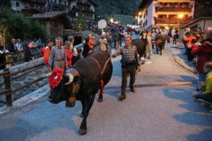 Die Kuh kehrt zurück – Das Aostatal feiert den Almabtrieb