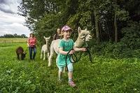 Alpaka-Wanderung Copyright Tourismus GmbH Nördlicher Schwarzwald