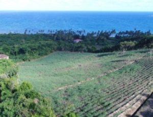Rum ist das neue Gewürz –– Brennen der Spirituose bleibt eine karibische Spezialität – Grenada erhält hochmoderne Destillerie