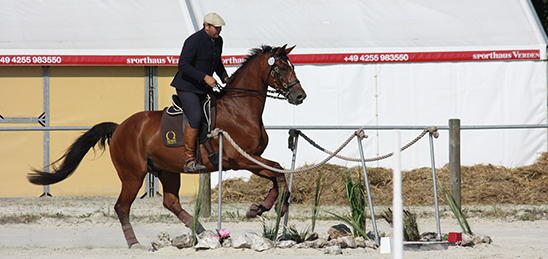Signum Sattelservice Working Equitation Trail