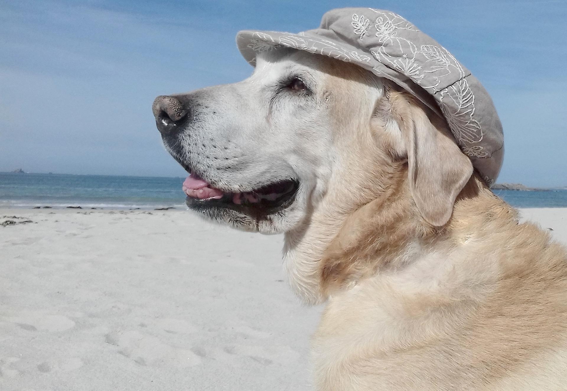 Feriendomizile mit Hund in St. Peter-Ording - Ferienwohnungen und Ferienhäuser für die Herbstferien mit Hund