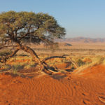 """Farm-Hopping"" in Namibia"