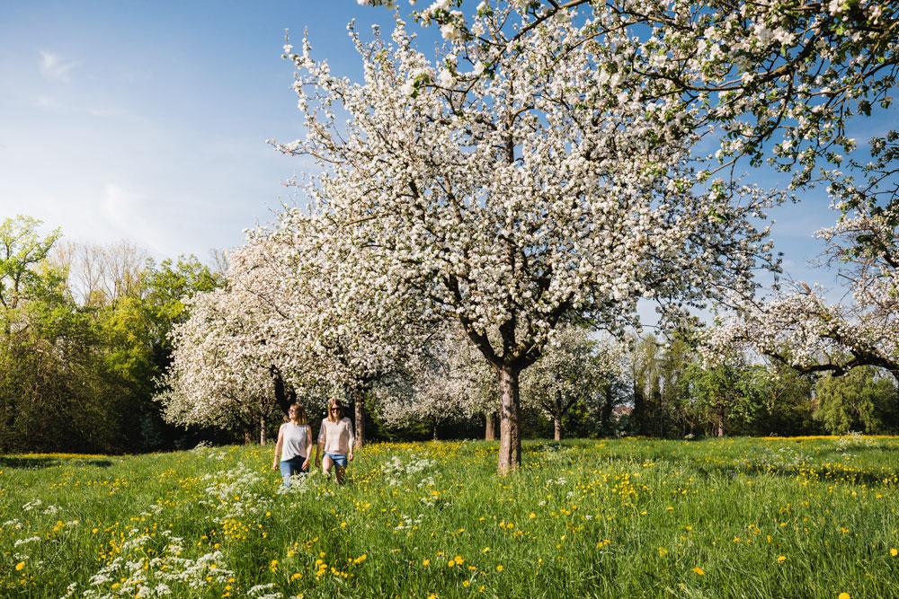 Blüten- und Apfelparadies Thurgau