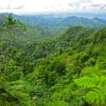 Regenwald-Trekking auf der Gewürzinsel – Grenada lockt mit tollen Wanderangeboten