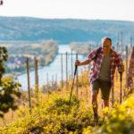 Wandern, wo der Rotwein wächst