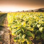 Zetes unterstützt Kampf gegen illegalen Tabakhandel