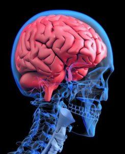 Demenz & Alzheimer besser verstehen – Das langsame Vergessen
