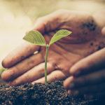 Grüne Verantwortung als Firmenphilosophie