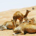 Die Reise zum Sehnsuchtsort Wüste