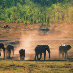 Neues und vielfältiges Reiseangebot für Afrika