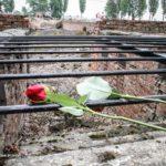 Die Kunst und der Holocaust – IBB e.V. lädt ein zur Studienfahrt nach Auschwitz
