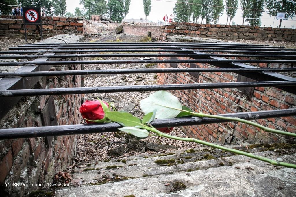 Blick auf zum Gedenken niedergelegte Rosen in der Gedenkstätte Auschwitz.