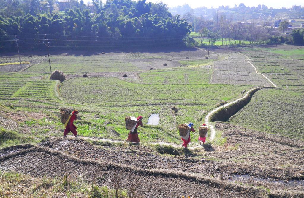 Bild2fieldsnearendofcanalAuschnitt_e-1024x670 ADB Study: More food for less water in southern Asia