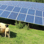 Solaranlagen fahren reiche Sonnenernte im ersten Halbjahr ein