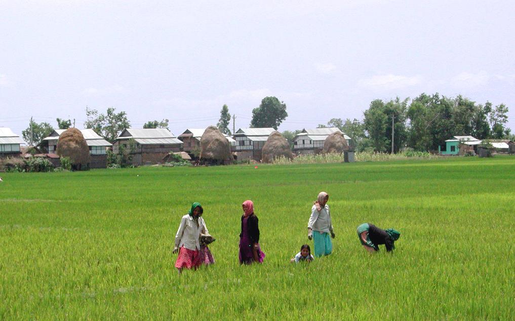sri-lanka_e ADB-Studie: Mehr Nahrung mit weniger Wasser für Südasien