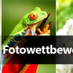 CyberLink startet Fotowettbewerb zum Thema Tiere
