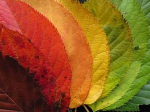 HerbstanfangBuecherKarina-300x225 Herbstanfang 2019