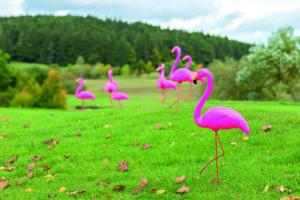 Schnelle Autos, Diamanten und Flamingos