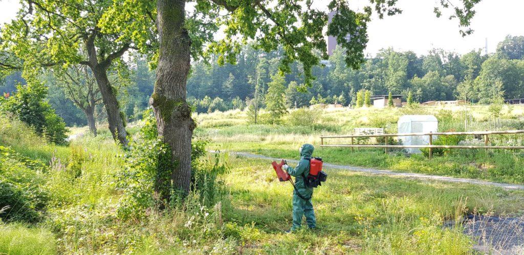 AS-1200_092950_HP-1024x498 Mit dem Akku-Sprühgebläse AS 1200 von Birchmeier den Eichenprozessionsspinner  bekämpfen