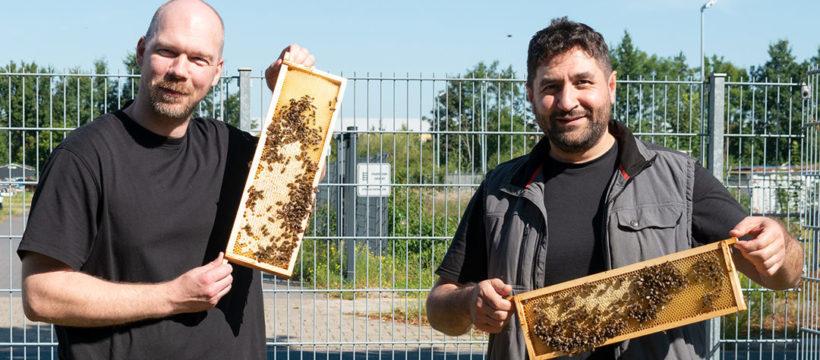 Das Bienen-Leasing geht weiter: Die beiden Logistiker Tobias Wellbrock und Houssam Remmo (v.l.) bei terminic zeigen stolz die Honigwaben der terminic-Bienen in die Kamera