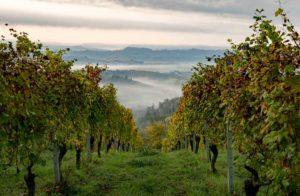 Weinberge-in-Langhe-Foto-Alessandro_Sgarito_Archvio_Ente_Turismo_LMR-300x196 Die Provinz Cuneo im norditalienischen Piemont ist für sicheren Tourismus gewappnet